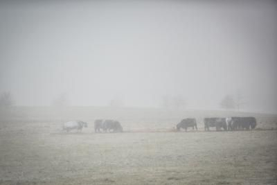 Getting through winter cold can be stressful for farm animals | UK College of Agriculture News