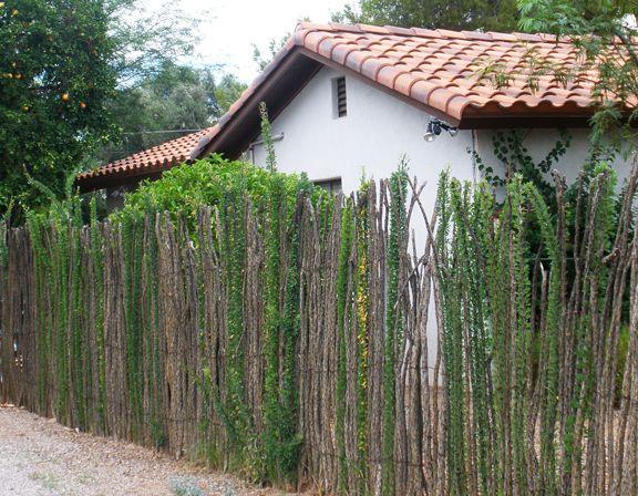 Ocotillo Fence In Bloom Backyard Garden Design Arizona