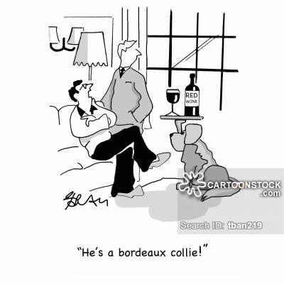 animals-bordeaux-wine-red_wine-border_collie-collie-tban219_low.jpg (400×400)