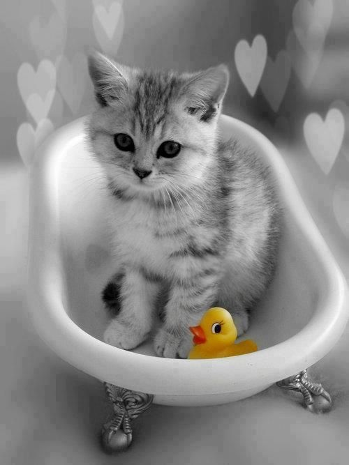 rubber ducky, I'm awfully fond of you... / color splash art #yellow / bathtime for kitty