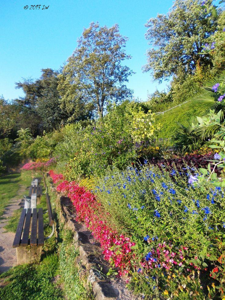 Blooms Heidelberg