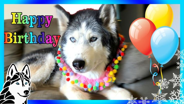 Happy Birthday Oakley The Husky 13 Years Old Gone To