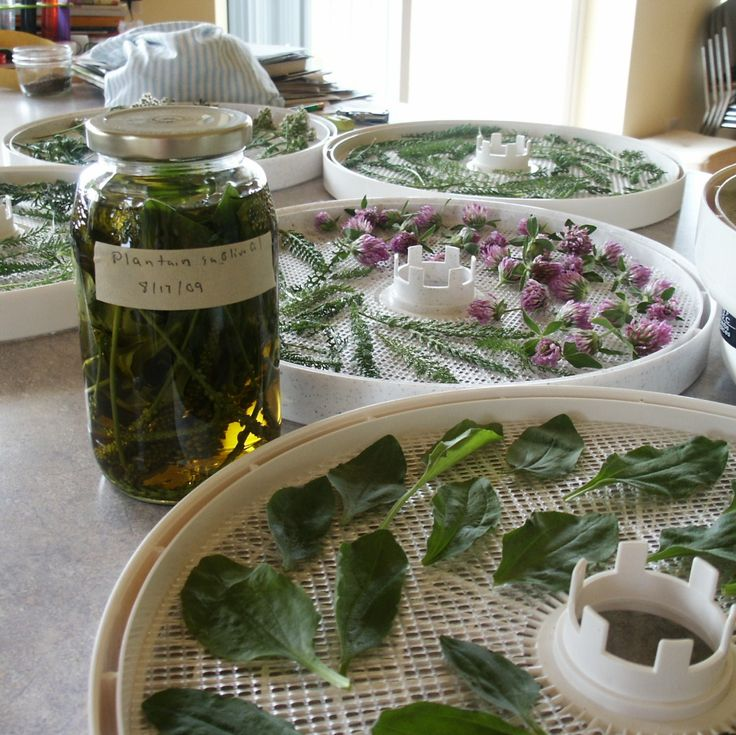 How to Harvest and Dry Herbs | The Prairie Homestead