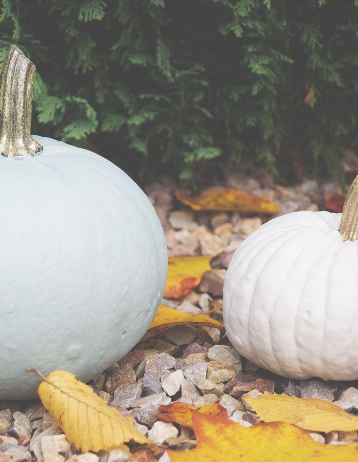 Ik zag op Pinterest om pompoenen te beschilderen, dus dit heb ik last minute geprobeerd, want het is nog steeds herfst! Ik vind ze heel mooi geworden!