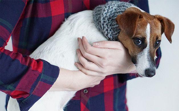 Jack Russell's Scarf, Small Neck Warmer for Dogs - tsvm - Obroże dla psów