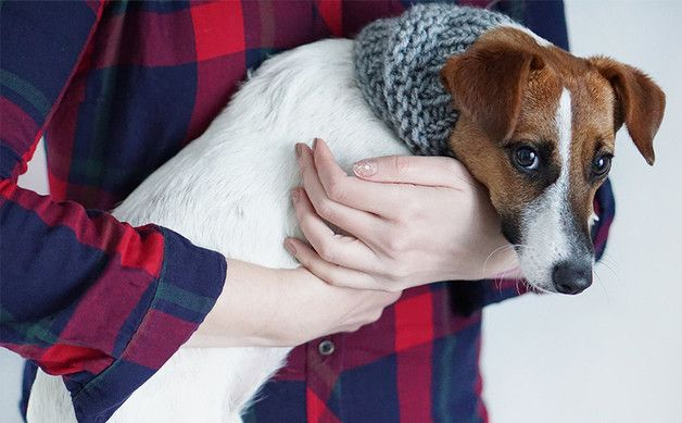 Jack Russell's Scarf, Small Neck Warmer for Dogs - tsvm - Obroże dla psów
