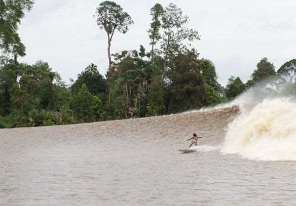 Surfing Bono Wave at Pelalawan Distric, Riau Province, Indonesia