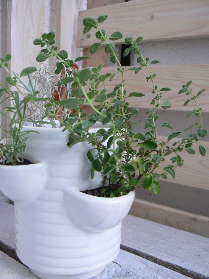 Mini doniczka na zioła (small pot for herbs )