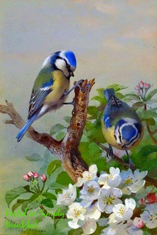 """Oiseaux Divers """"Au plus fort de l'orage, il y a toujours un oiseau pour nous rassurer. C'est l'oiseau inconnu, il chante avant de s'envoler."""""""