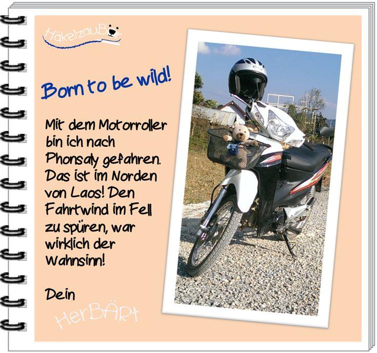 Hallo ihr Lieben! Bär on Tour! Auf so einem Motorroller fühlt man Freiheit ohne Ende! Willst Du mehr über mich erfahren, dann schau doch mal unter www.topp-kreativ.de