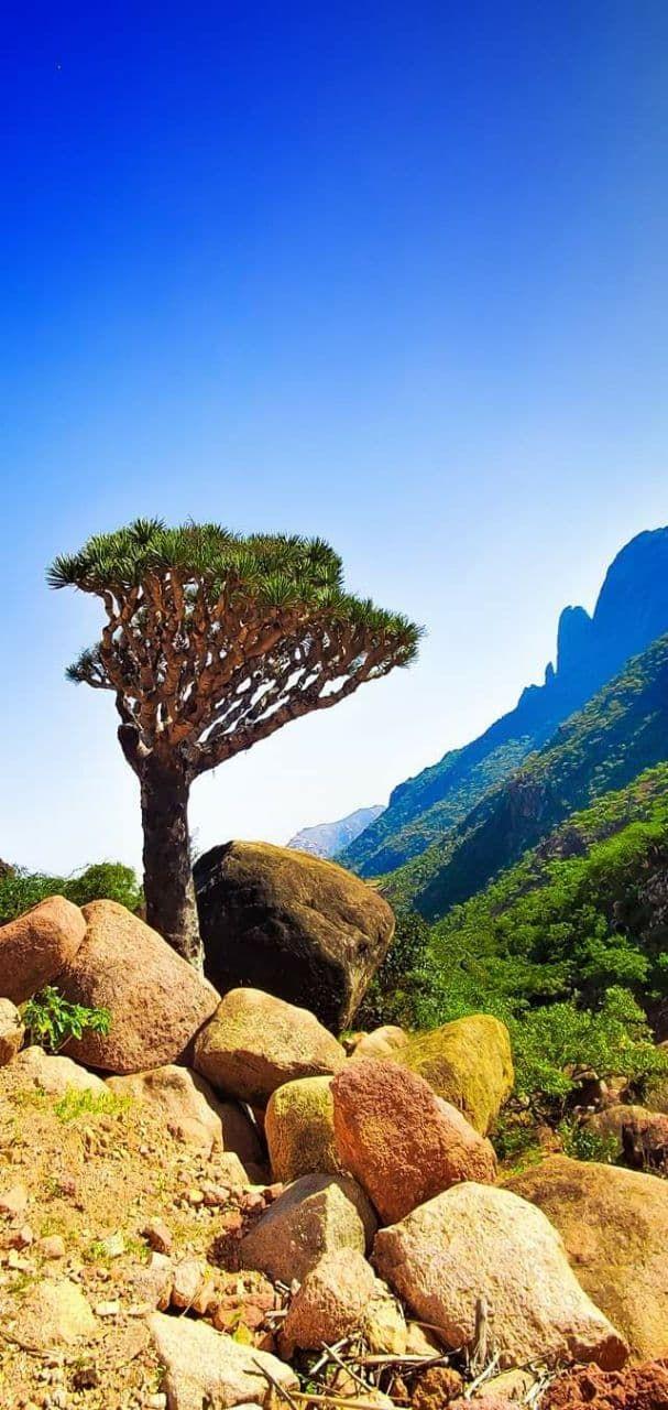 خلفيات جزيرة سقطرى خلفيات جوال طبيعة In 2021 Island Wallpaper Socotra Natural Landmarks