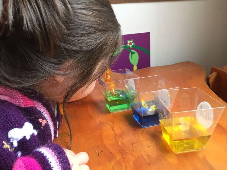 Una manera divertida de aprender que de los colores primarios podemos lograr otros colores es mezclando! Hoy compartimos esta actividad que realizamos con Ema, y que a ella le encanta, trabajaremos el área cognitiva al crear e inventar colores, y la motricidad fina al verter un poquito de cada color sobre otro y mezclar!. Estamos usando simplemente envases transparentes de plástico (de postres, somos tan chanchos por aquí), agua, colorante.