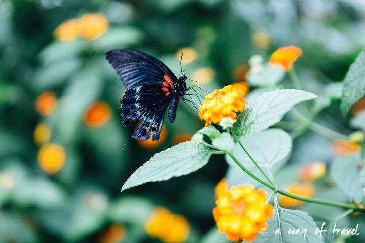 montreal jardin botanique 21