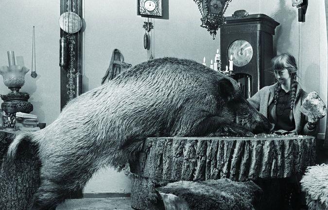 Совместная трапеза в обществе необычного домочадца, Симона с кабанихой Жабкой. Фото - Лех Вильчек
