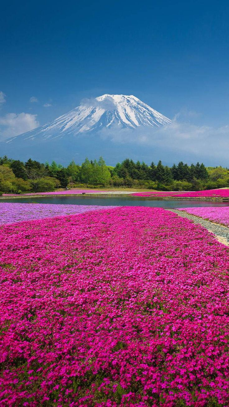 Mt Fuji, Japan | Smart Phone Wallpaper and Lock Screens ...