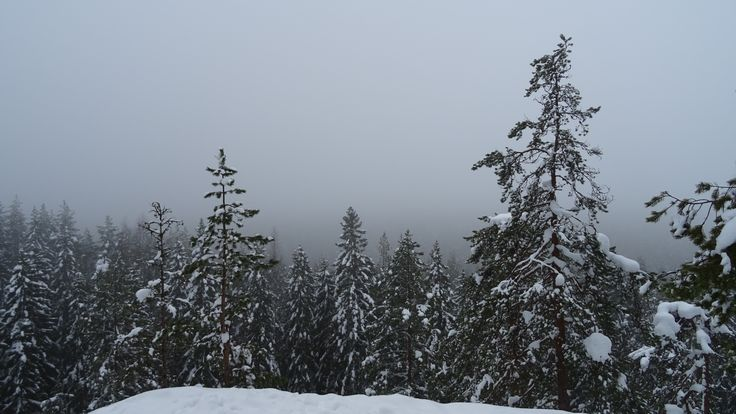 Foggy view in the woods of Neulamäki, Kuopio, Finland.