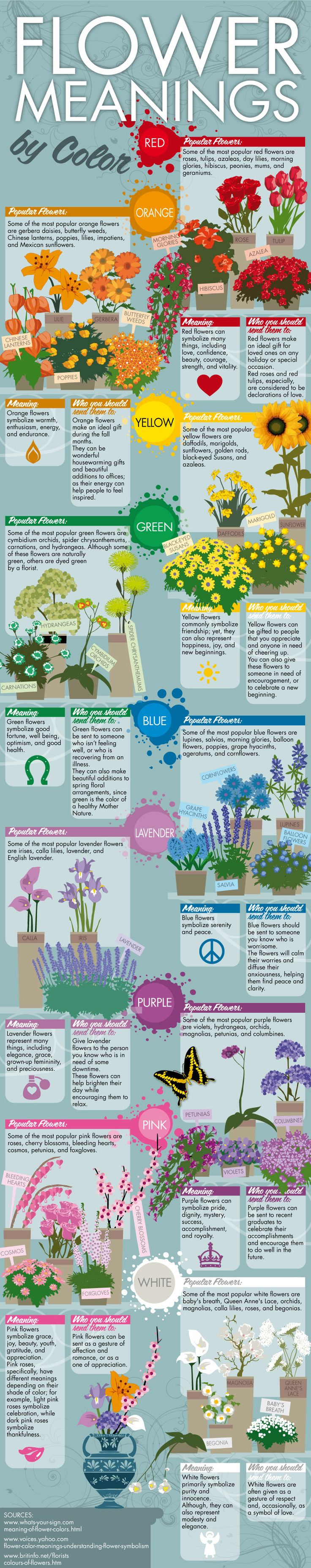 Interesting and informative infographic all about the meanings behind the different colors of flowers.