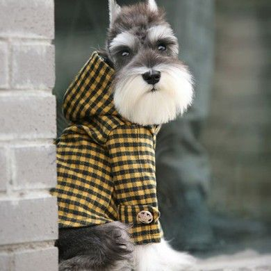 Hipster dog. S'hip n' cool