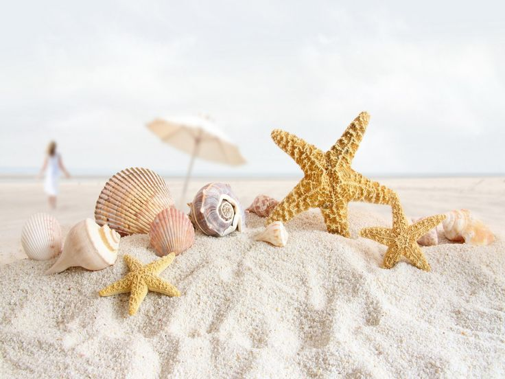 caribbean seashells | 美しいカリブ海の貝殻 pc 用