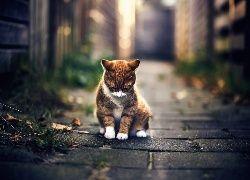 Brązowy, Kot