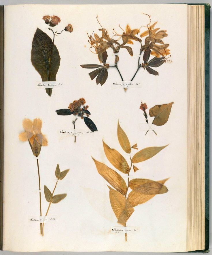 New Emily Dickinson us Herbarium A Forgotten Treasure at the Intersection of Science and Poetry
