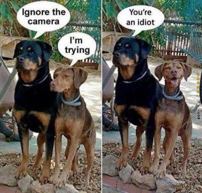 Ignore the camera