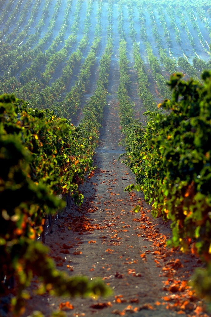 Finca Moncloa wineyard.