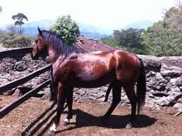 Resultado de imagen para caballos hermosas