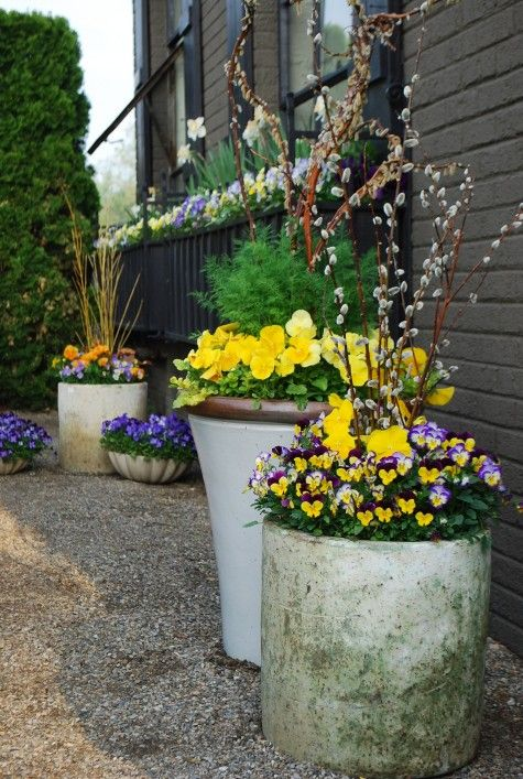 Yellow + purple=eye candy: Plants Can, Yellow Flowers, Spring Pots, Pussy Willow, Spring Planters, Branches Stuffed, Gorgeous Spring, Planters Ideas, Willow Branches