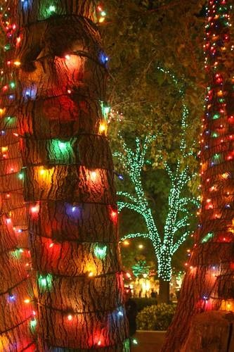 Glendale Glitters, Arizona every year at Christmas... so beautiful and fun