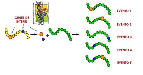 Para empezar… definamos lo que es una planta transgénica http://buff.ly/1LbC68K