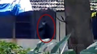 SCARIEST CREATURE EVER CAUGHT ON TAPE | Scary Ghost Video | Creepy Real Life Creature | Horror Video