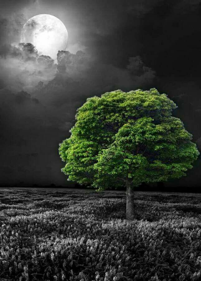 Gorgeous Black And White Landscape Photography Blackandwhitelandscapephotography Nature Photography Trees Color Splash Photo Color Splash Art
