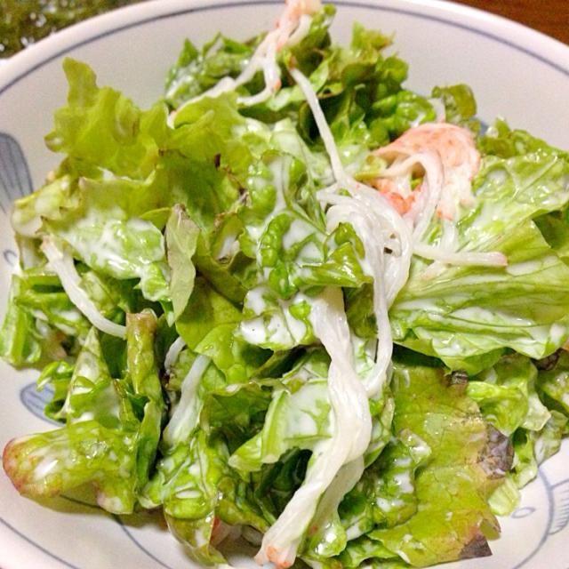 サニーレタスもさもさ生えてたので収穫しました(≧∇≦)おいしいー!! - 43件のもぐもぐ - 自家製サニーレタスのサラダ by hjktclck