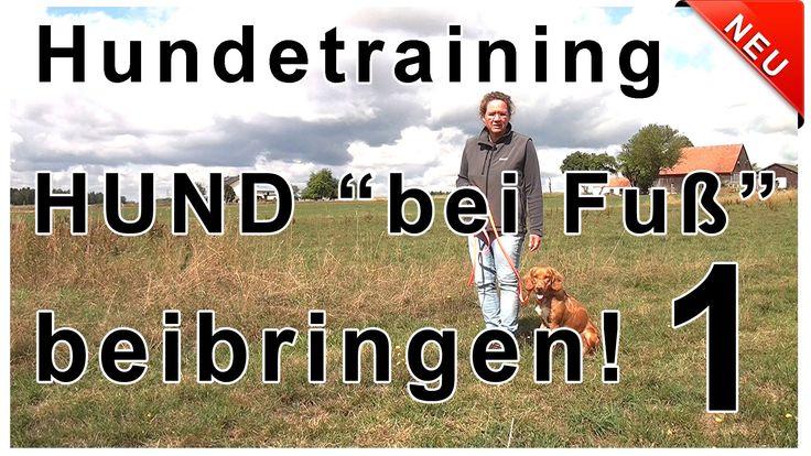 Hund bei Fuß beibringen - In diesem Video erfährst du, Wie du deinem Hun...
