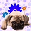 A great list of Cute Male Puppy Names at puppy-names-hq