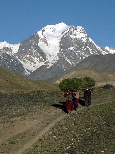 Daily burden of firewood Savnob, Gorno Badakhshan Autonomous Oblast, Pamir Mountains, Tajikistan.: