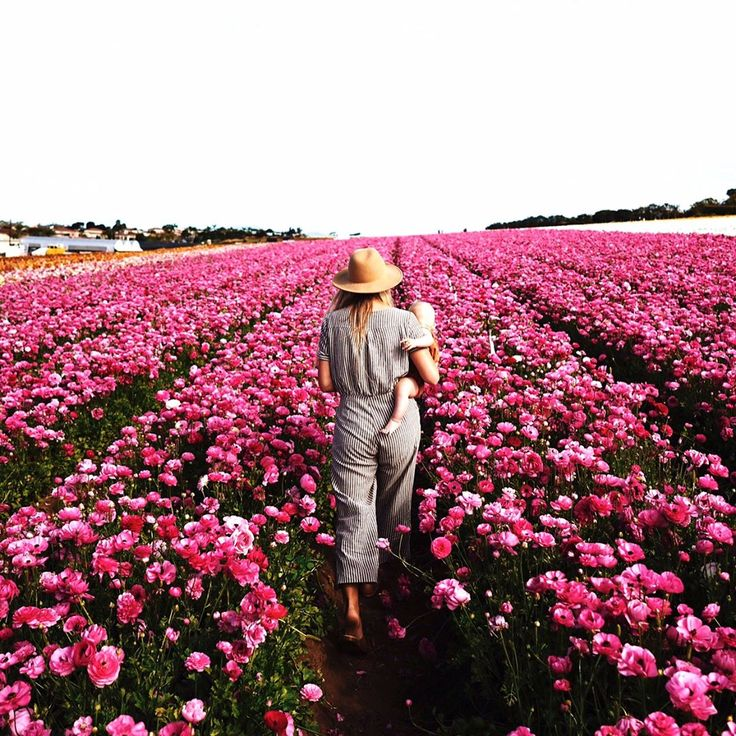 """Miles and miles of ranunculus flowers. I'll take it."