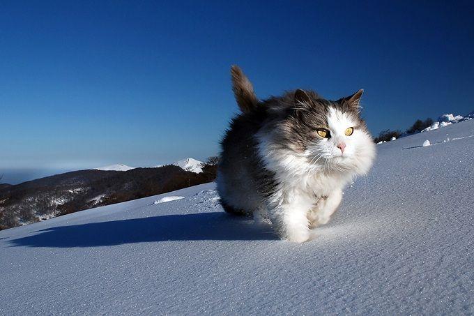 big brave kitty!