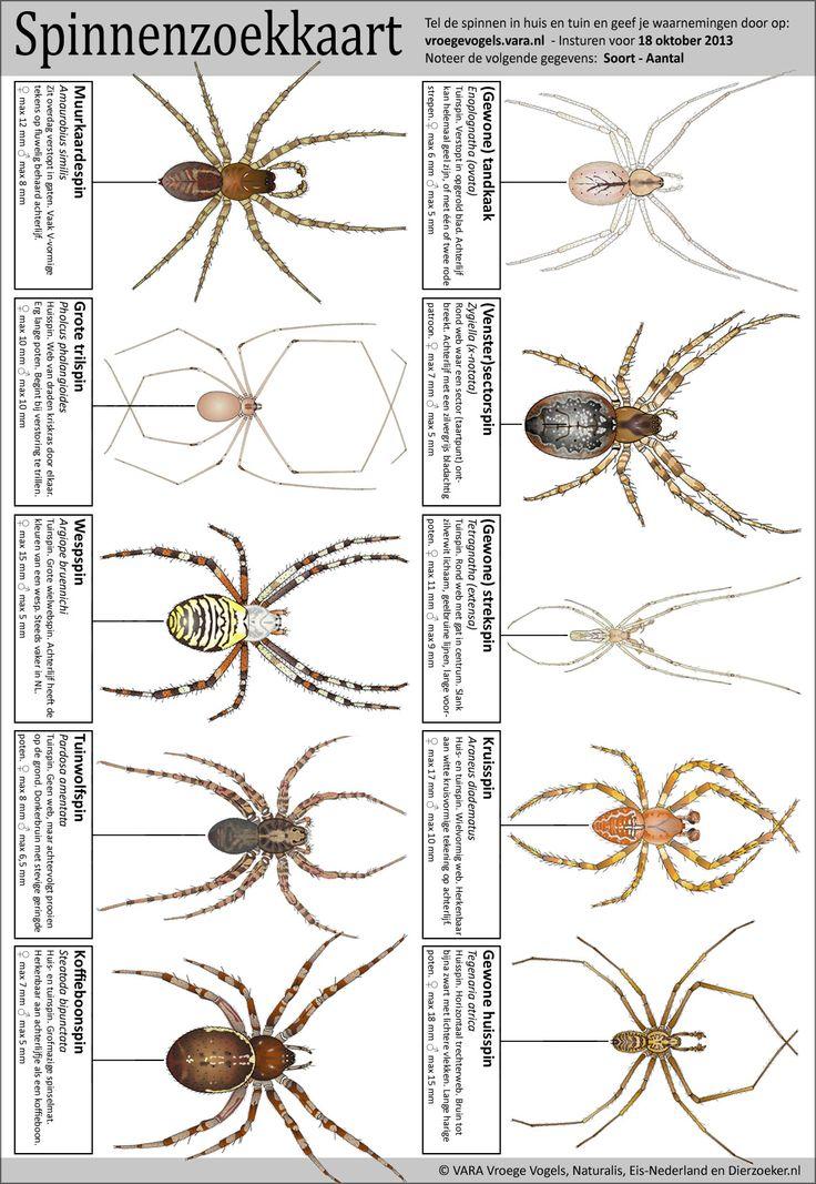 spinnenzoekkaart.jpg 1.160×1.683 pixels