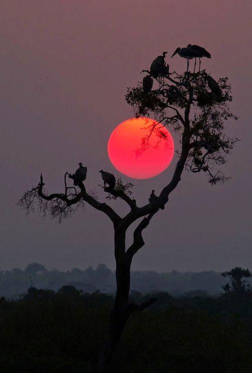 Serengeti sunset © Pamela Wayne-Carter Across the Mara from Kenya, the sun…