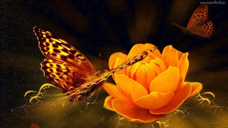 Grafika, Motyl, Kwiat