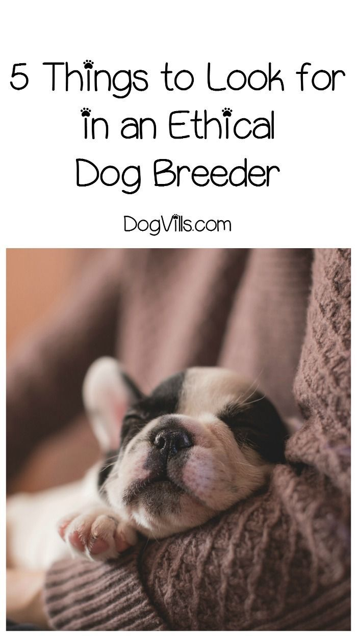 Finding an ethical dog breeder can seem like no small feat. Check out these tips from an expert to help you avoid bad breeders!