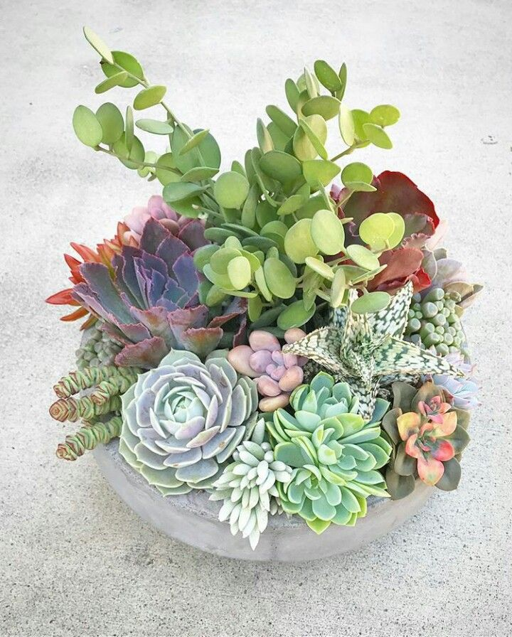 no link, just a beautiful succulent arrangement. Wonder what the tall green one is