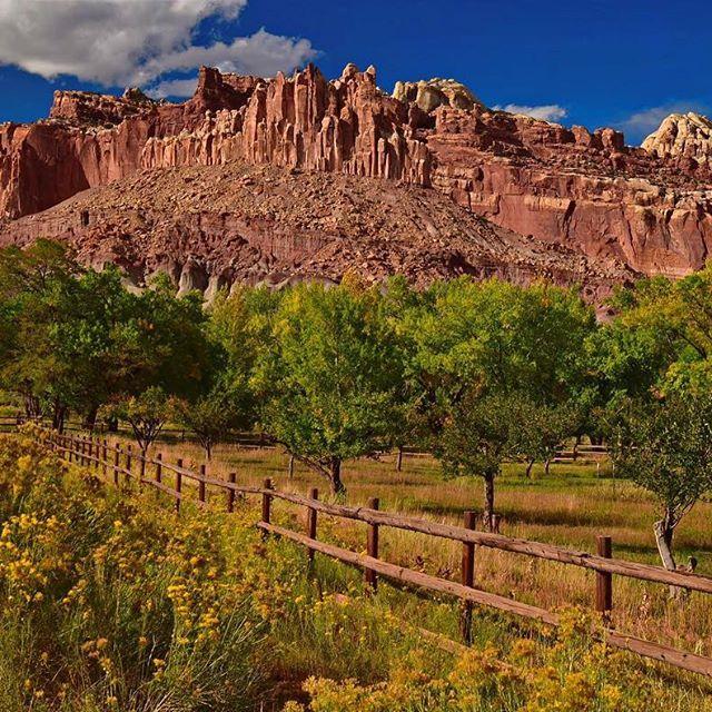 【gemirin526】さんのInstagramの写真をピンしています。《キャピトルリーフ国立公園の象徴的な岩山「The Catsle」 #キャピトルリーフ国立公園 #アメリカ絶景 #アメリカ大自然 #グランドサークル #岩山 #黄色い花 #林 #青空 #capitolreefnationalpark #grandcircle #utahisrad #erosion  #wildernessculture #coloradoplateau #wilderness #nikonphotographers #travelphotography #traveltheworld  #wonderfulworld  #landscape_lovers #landscapehunter #worldtravelpics #awesomeearth #discoverearth #earthfocus #awesomepix  #theworldshotz》