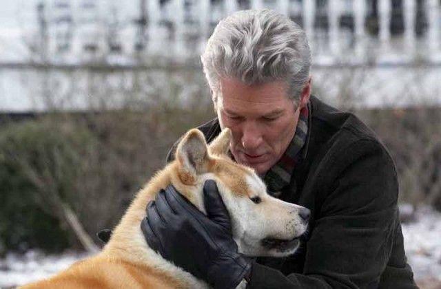 Самые сильные примеры героической преданности собак