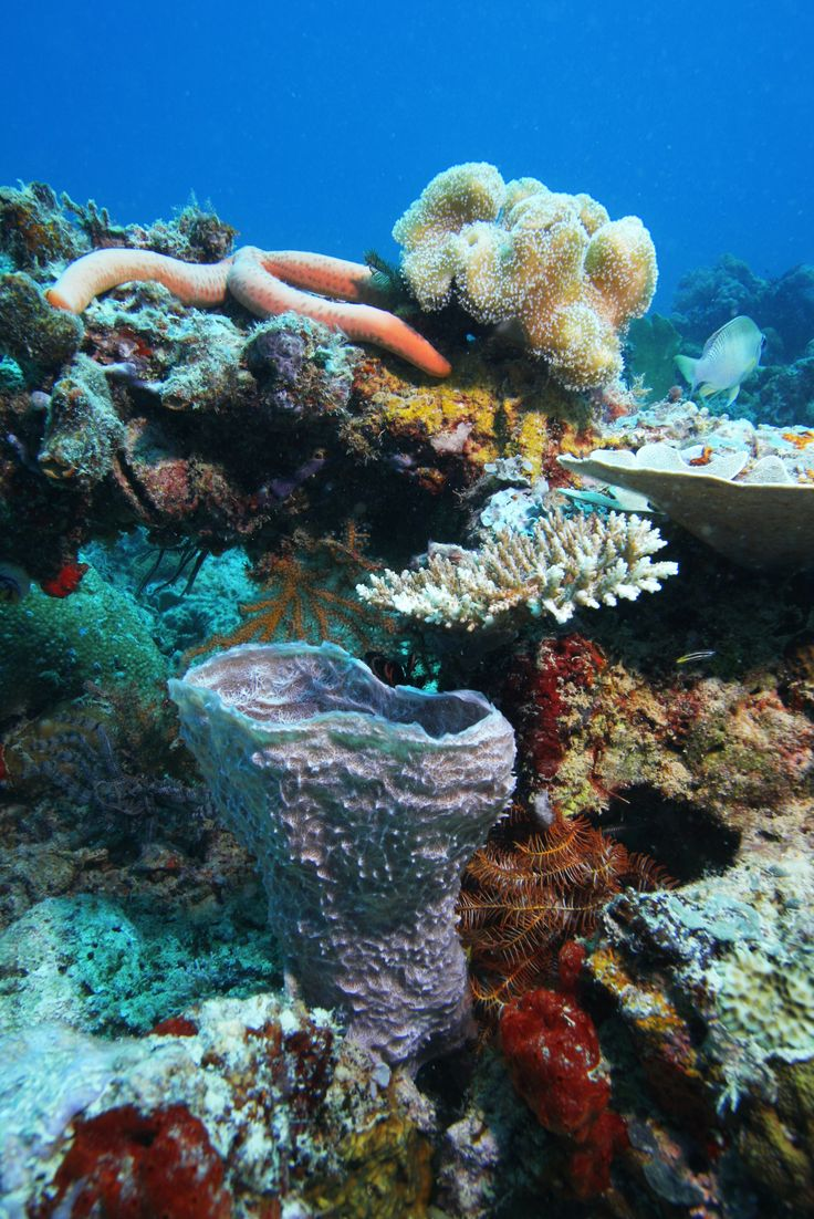 Dive in Phuket, #Thailand with Scuba Cat Diving. #PADI courses, daytrips, liveaboards and more.