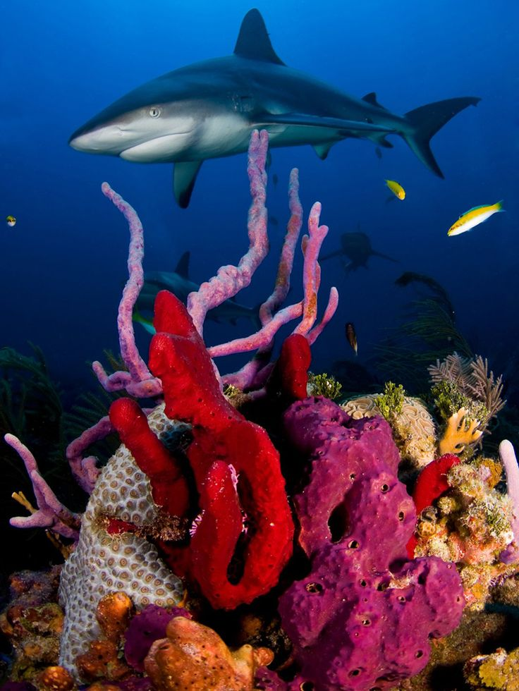 It's so beautiful under the sea. The colors are magnificent!