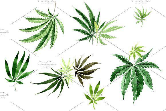 Leaves Hemp Plant Watercolor Png Watercolor Plants Hemp Art Illustration