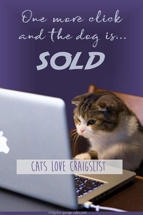 Friday Funny Cats Love Craigslist Funny Craigslist Ads Craigslist Funny Cat Quotes Funny